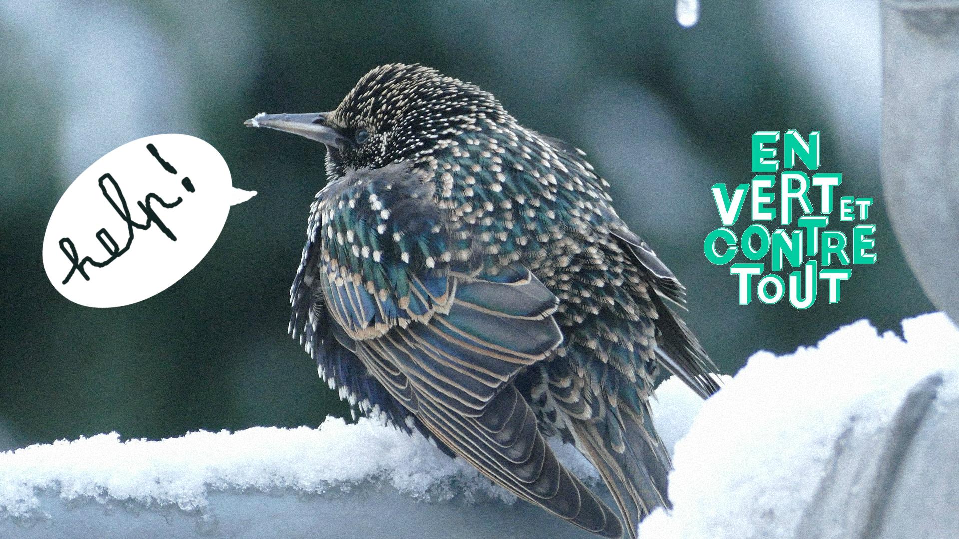 aidons les oiseaux contre le froid en vert et contre tout. Black Bedroom Furniture Sets. Home Design Ideas